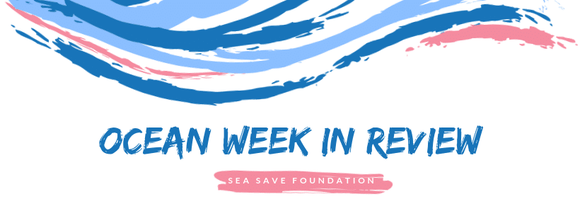 Ocean week in review
