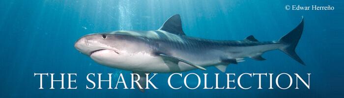 sharkcollection
