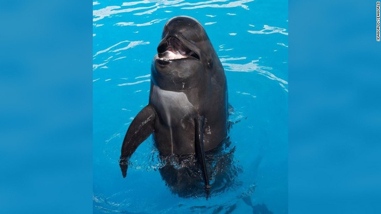 SeaWorld San Diego announced the death of one of the park's attractions, Bubbles the pilot whale.