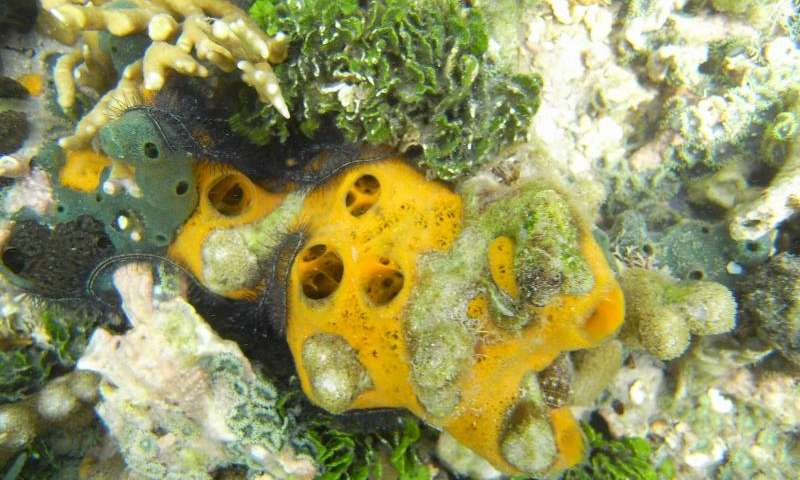 Researchers identify marine sponge strategies to survive in Antarctic and Tropical latitudes
