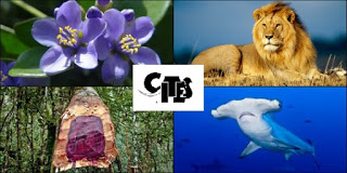 CITES protected animals and plants
