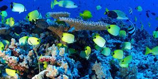 Papahanaumokuakea, national marine reserve, tropical fish
