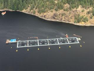 algae bloom, fish farms, British Columbia