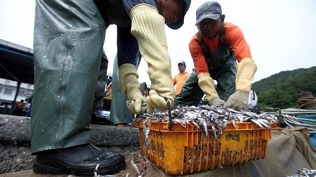 Produce suspendió pesca de anchoveta por tres días