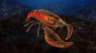 Indonesia, shrimp, Bilbo Baggins