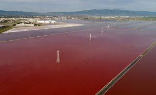 San Francisco Bay, Cargill Salt Ponds