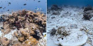 pristine coral vs damaged coral
