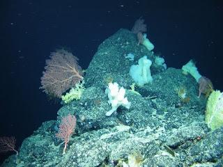 ROV, Deep Sea Sponges