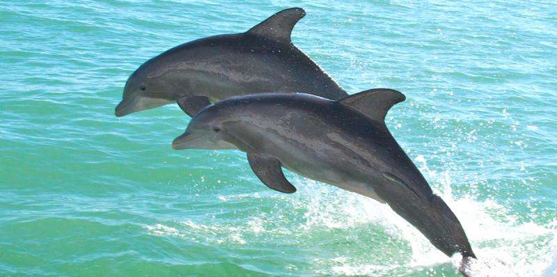 Dolphin health is connected to human well-being