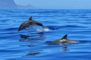dolphins, dolphins and Alzheimer
