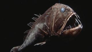 fangtooth, deep sea animal gene patents