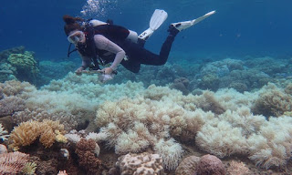 great barrier reef, great barrier reef bleaching