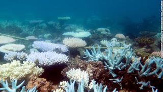 Australia, Great Barrier Reef, Coral Reef Bleaching, Coral IVF