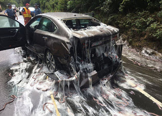 hagfish, slime eels, hagfish highway, slime eels highway