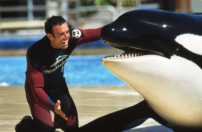John Hargrove, a trainer who spent 14 years working with orcas, mostly at SeaWorld, eventually became disillusioned with the company
