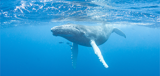 Pacific Humpback Whale, lawsuit