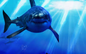 Image result for great white sharks