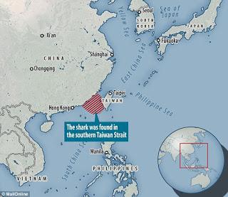 intersex shark, Taiwan