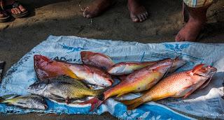 Mexican fish market