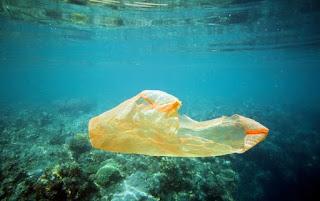 plastic bag, coral reef