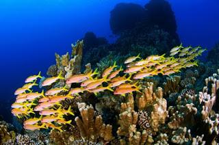 rapa nui Marine Protected Area