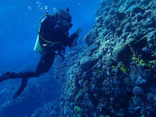 scuba diver, reef life survey