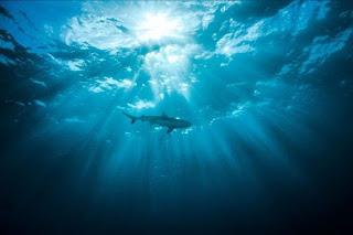 shark, arabian sea
