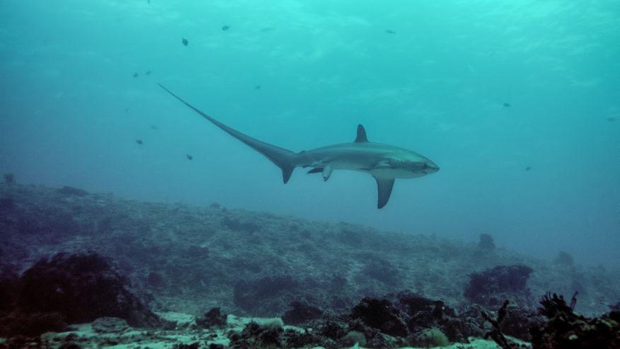 sharkgivingbirth1.jpg
