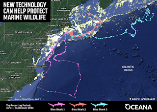 Global Fishing Watch, Oceana, shark and fishing boat tracking tool