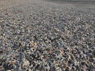 starfish strandings, England