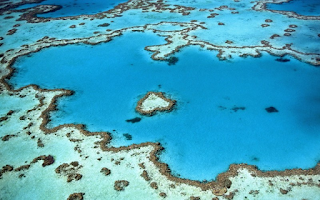 Coral Reef heart