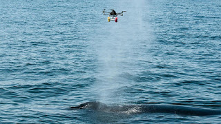 drones and whales