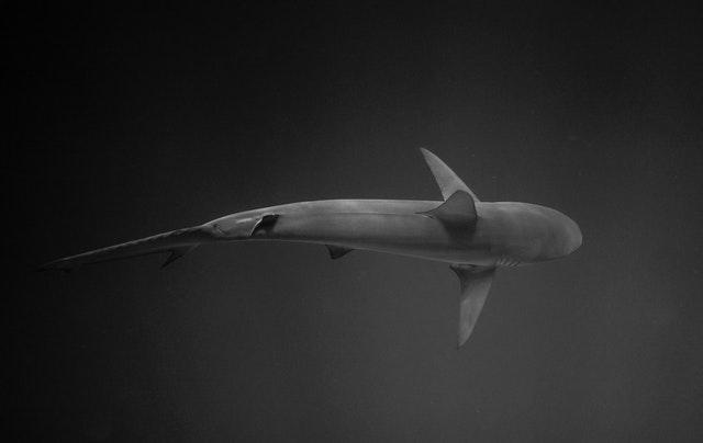1. United Kingdom to Introduce World-Leading Ban on Shark Fin Trade