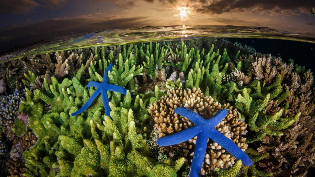 Greenpeace Calls on Taiwan to Draft Ocean Protecting Legislation, Ocean Photography Competition Highlights Wonders and Issues, 3D Printing Could Help Save Hong Kong's Coral, and More...